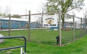 Dog_Park_8