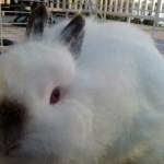 Dot the Bunny Rabbit