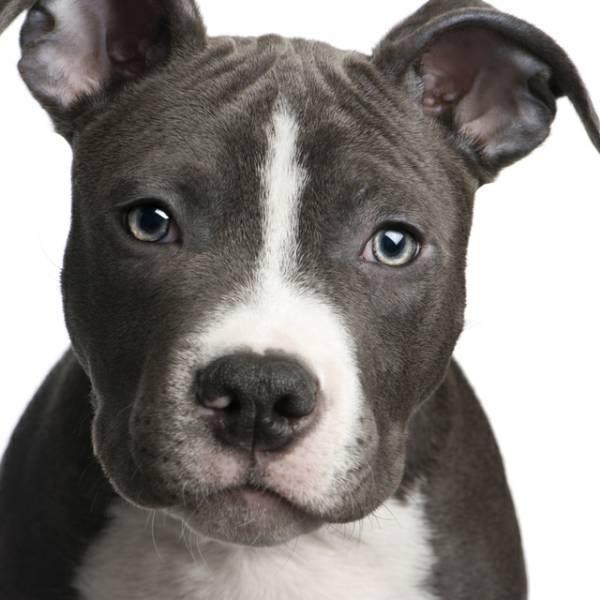 Dog Adoption Process Beverly Animal Shelter